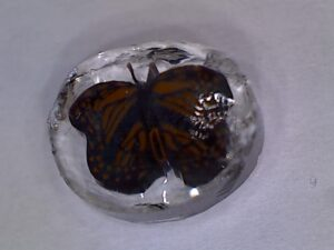 butteryfly glass millie image