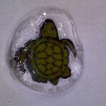 Glass turtle millie image